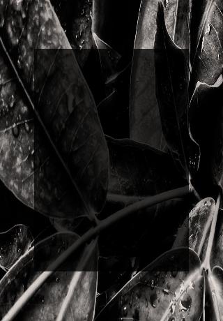 plantas-black-friday